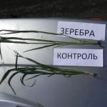 Озимая пшеница-Белгородская область-БЭЗРК-Белгранкорм-2