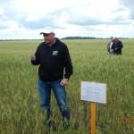 Пшеница яровая-Челябинская область-Силач-1