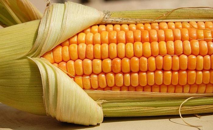 Зрелая кукуруза